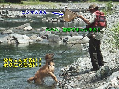 お魚ください!