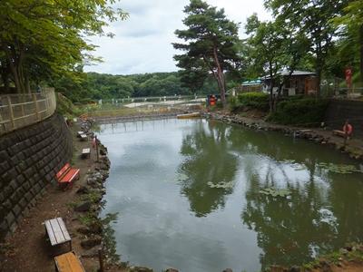 宮沢湖金魚釣り堀