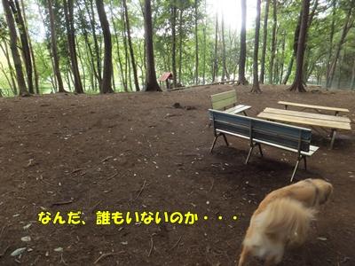 宮沢湖大型犬エリア上から