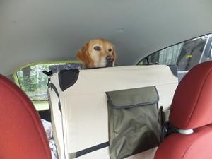 運転席から見たゾ