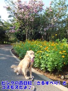夏と秋の花