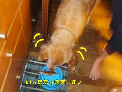 うまっ(犬)