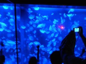 クラゲの水槽