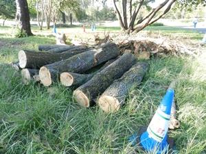 処理中の木