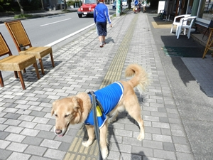 軽井沢を歩くセレブ犬?!