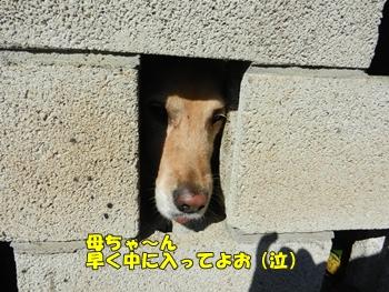 塀の穴より