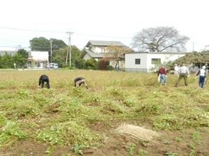 蕎麦刈り風景