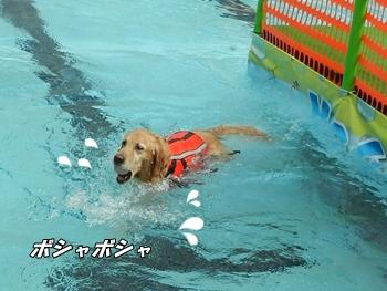 泳ぎはいまいち?