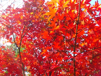 日本の秋!