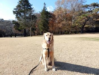 稲荷山公園です
