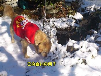 昼間の雪の庭