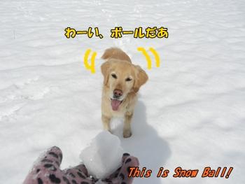 雪玉投げちくり!