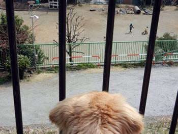 保育園を見る犬