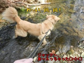 小川に入ってしまった犬