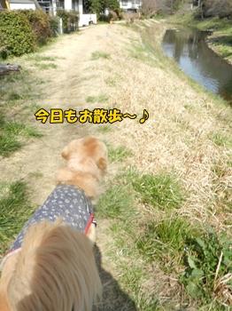 川沿いに散歩