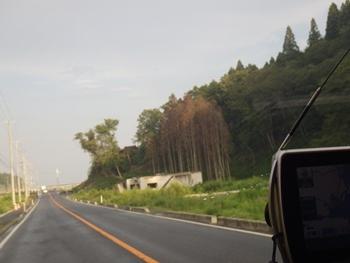 茶色く枯れた杉のところまで波が来た証拠です