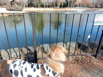 噴水の出ている池