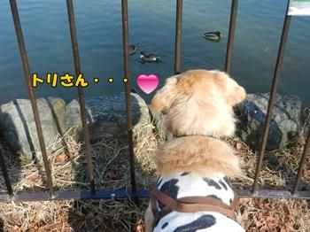 池より鳥さん