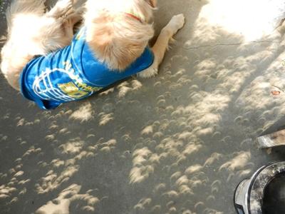 足元を見れば不思議な木漏れ日