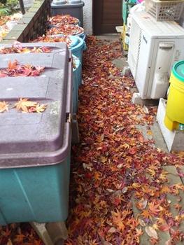 ゴミ置き場の落ち葉