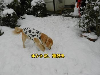 雪、クンクン