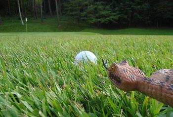 2013 ゴルフ年賀状