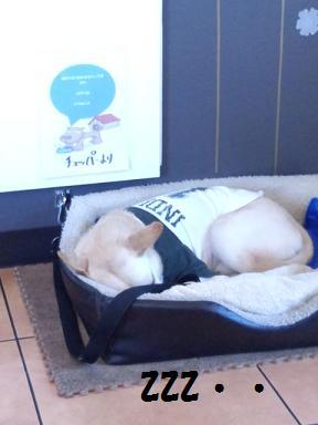 寝てるチョッパー