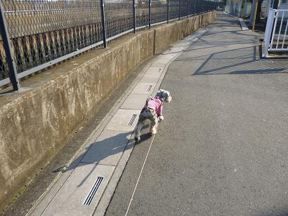 2012 ブログ用 720散歩