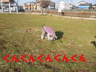 2012 ブログ用 724くんくんくん
