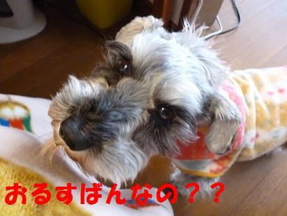 2012 ブログ用お留守番