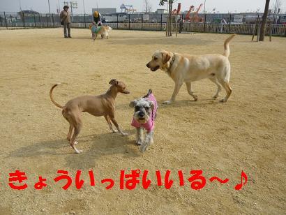 2012 ブログ用 743いっぱい