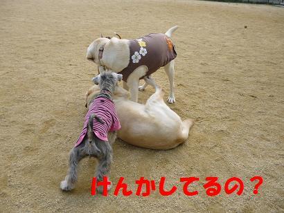 2012 ブログ用 746けんか
