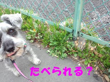 2012 ブログ用 773食べられる?