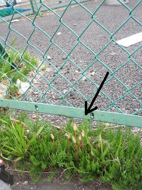 2012 ブログ用 770つくし