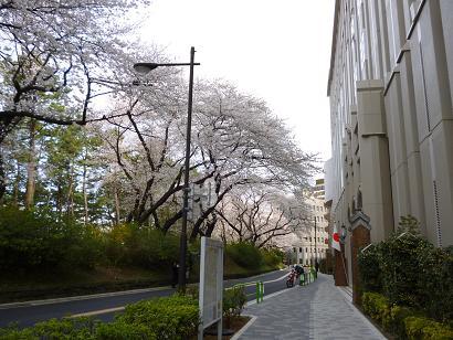 2012 ブログ用 777学校前の桜
