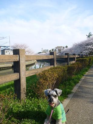 2012 ブログ用 809花見3