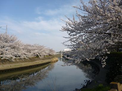 2012 ブログ用 808花見2