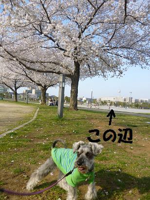 2012 ブログ用 810花見4