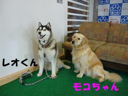 2012 ブログ用 851看板犬