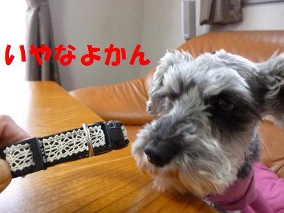 2012 ブログ用 799いやなよかん