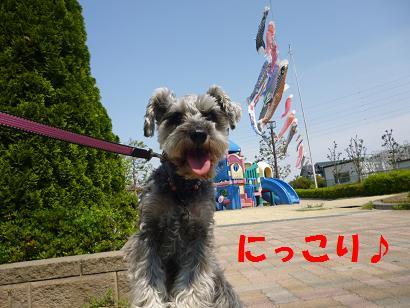 2012 ブログ用 804こいのぼり3