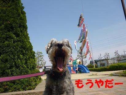 2012 ブログ用 806こいのぼり4
