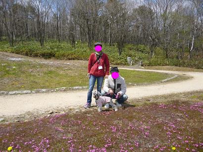 2012 ブログ用 839芝桜