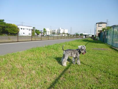 2012 ブログ用 904綾瀬川1