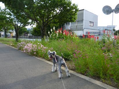 2012 ブログ用 917散歩3