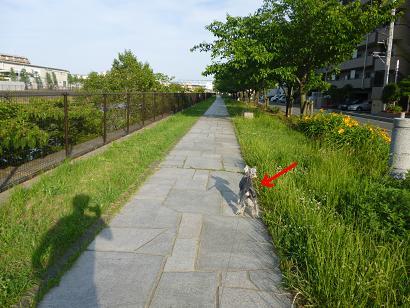 2012 ブログ用 920散歩1