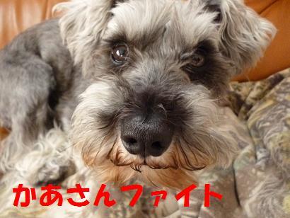 2012 ブログ用 937かあさんファイト