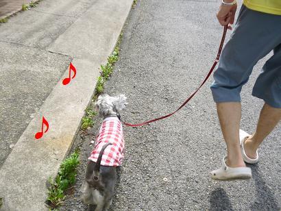 2012 ブログ用 969お散歩~♪