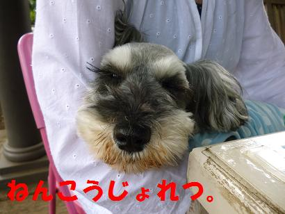 2012 ブログ用 981年功序列