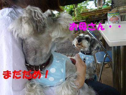 2012 ブログ用 988まだだめ!